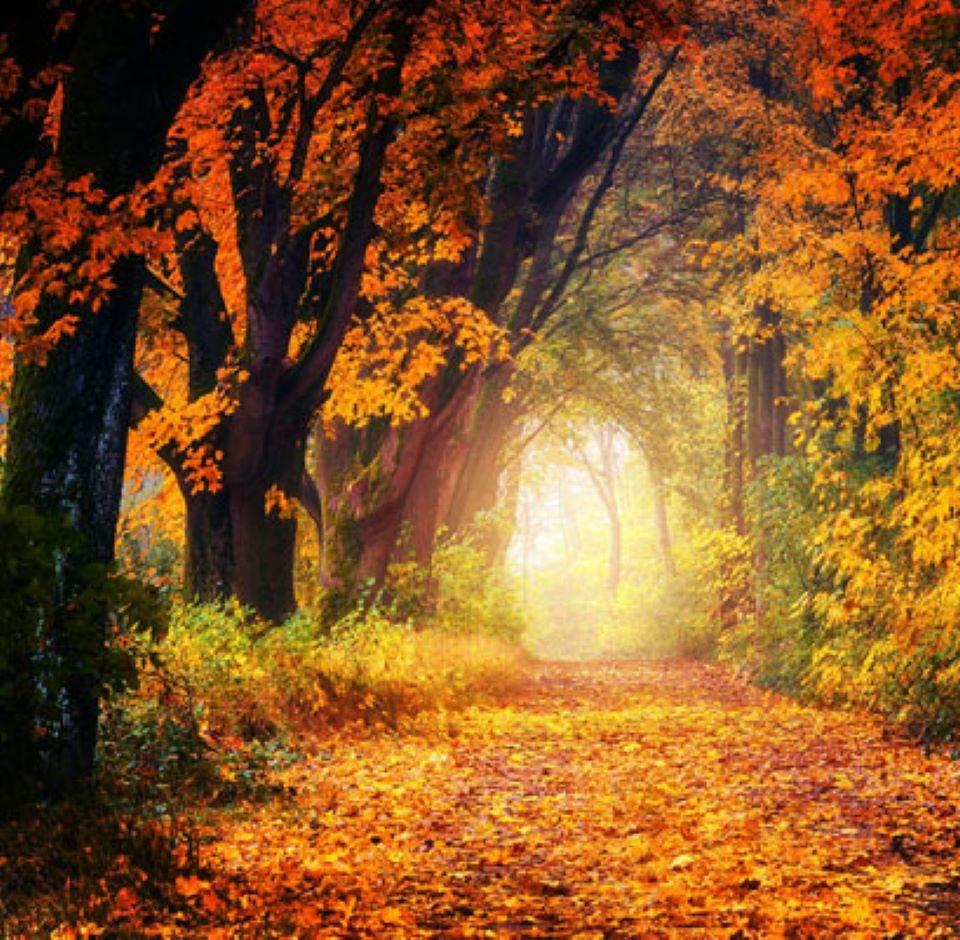 autumn ireland