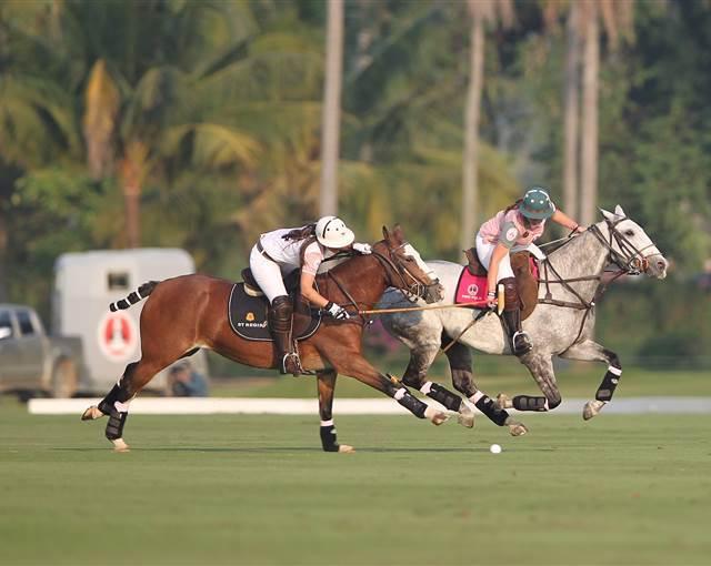 Argentina polo horses 1