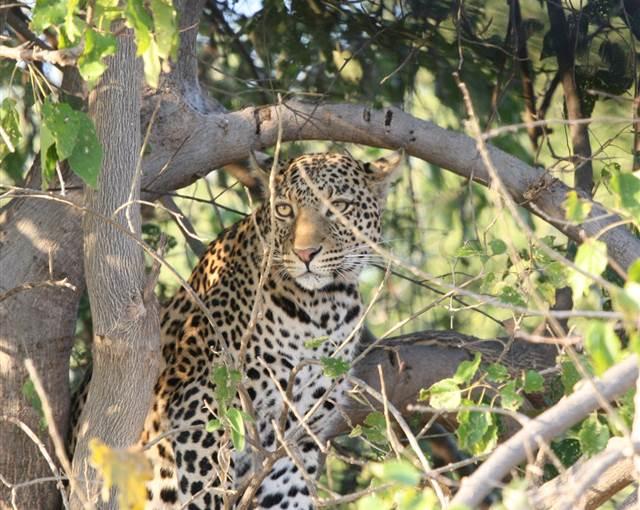 Botswana 2012 ben forbes 106