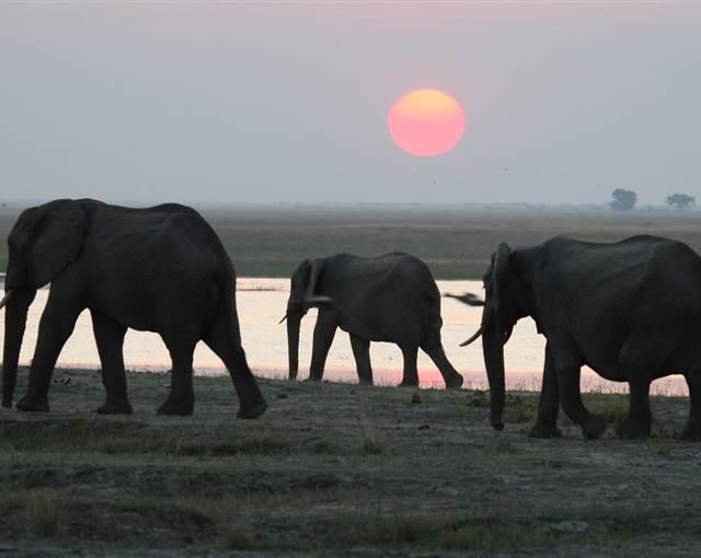 Botswana 2012 ben forbes 229