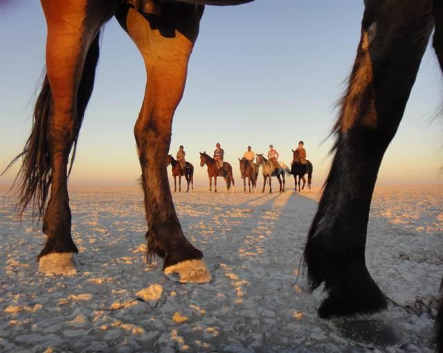 Horseback riding panel image min