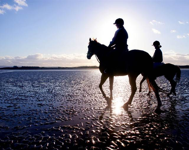 Canter by the Sea