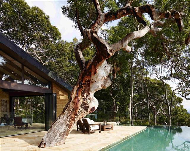 pretty beach house infinity pool tree (2