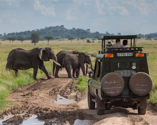 serengeti pioneer camp game drives