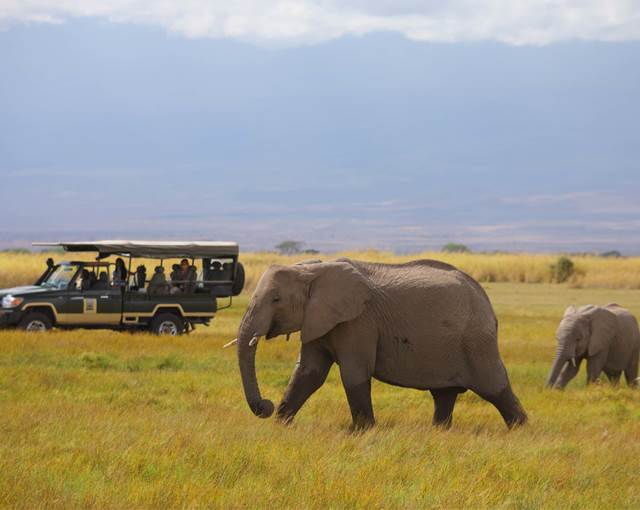 tortilis camp amboseli game drive elepha