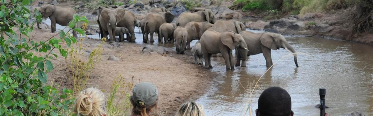 Walking Safari 2