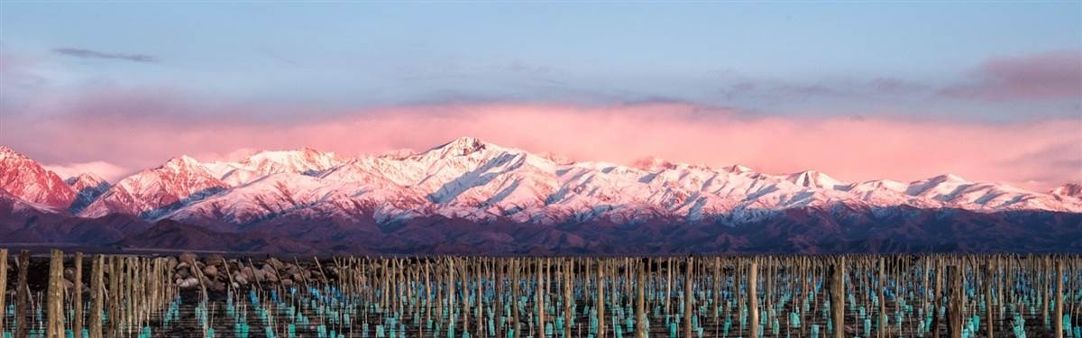 Andes Moutains Vineyards Wine Country Vi