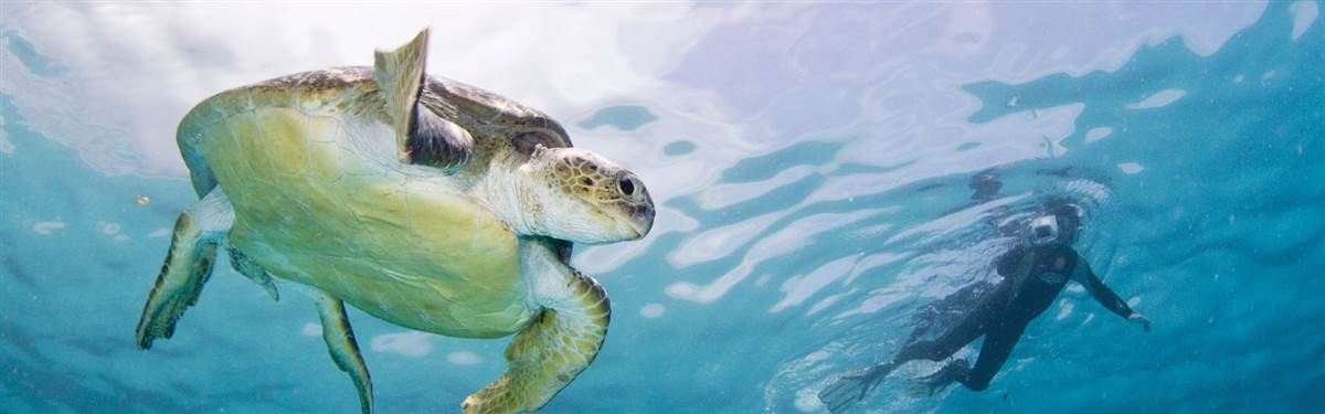 Diversity Scuba  Turtle Dive