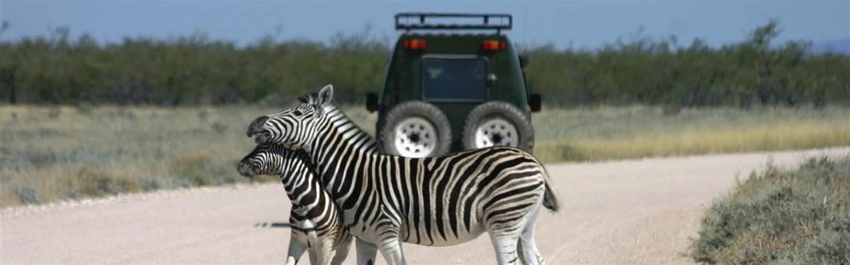 Namibia Zebra