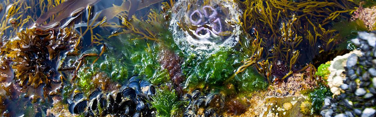 Pollock Holes Kilkee2 (2)