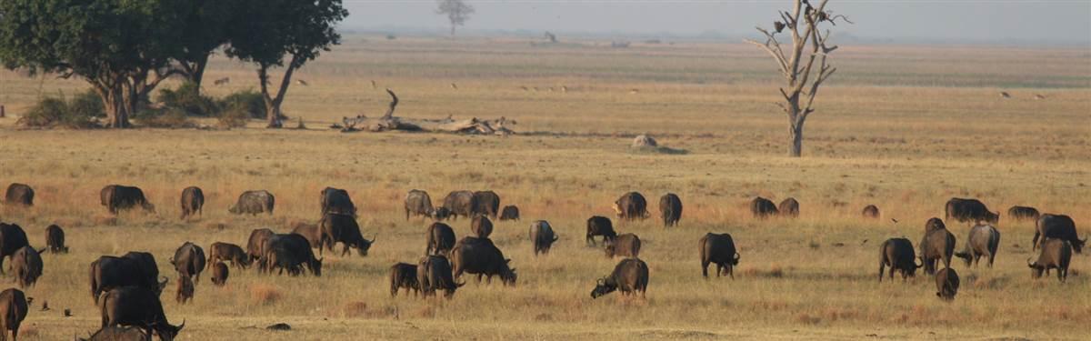 Pride of Botswana (3)