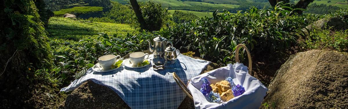 da picnic spot satemwa