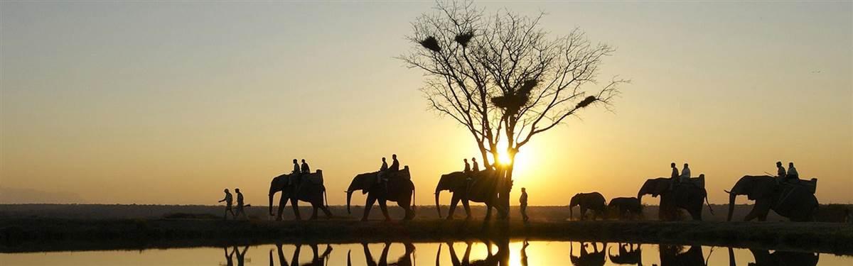 Elephant camp jabulani