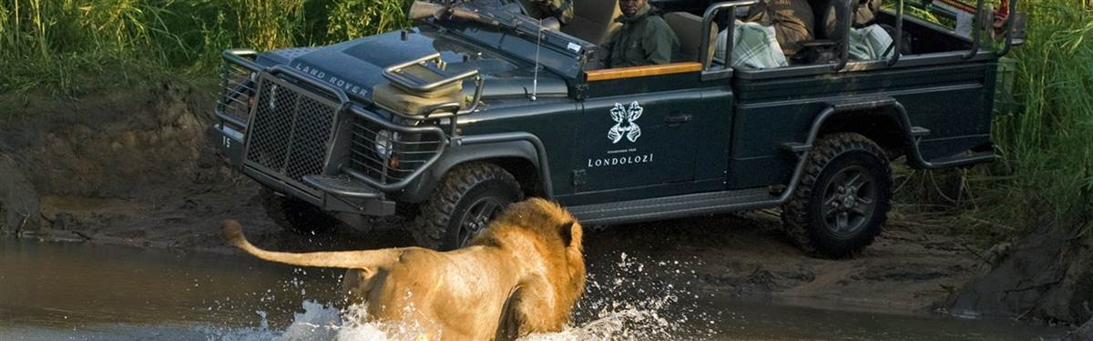 londolozi game reserve landrover lion