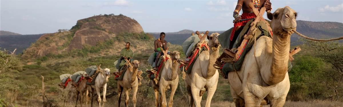 ol malo house kenya camels