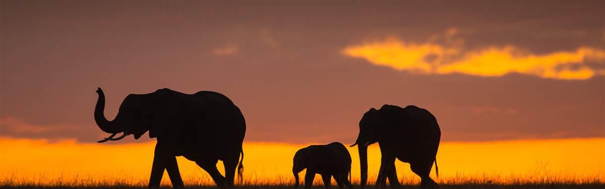 rsz elephants at dusk