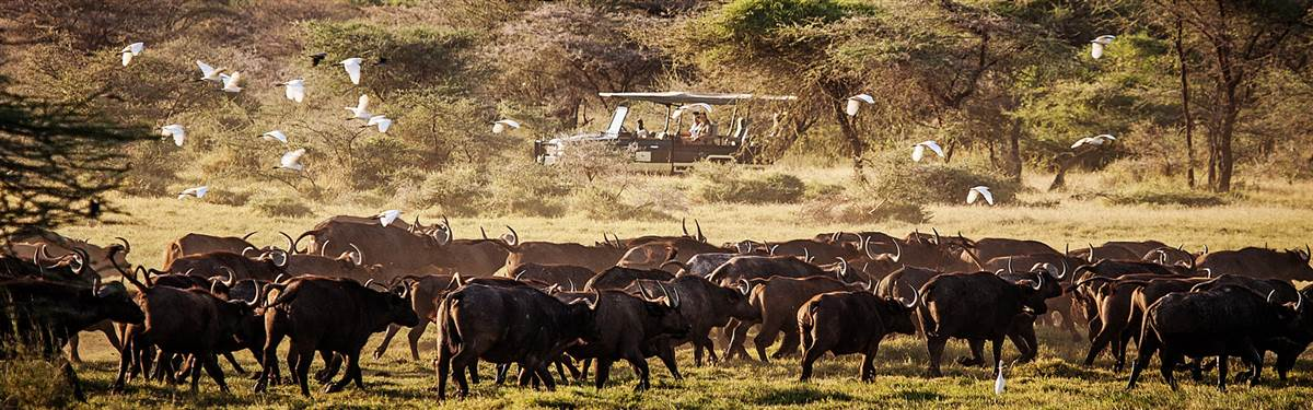 rsz wildlife of the shaba national park