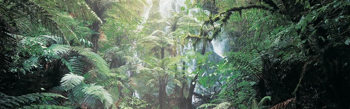 treetops lodge   waterfall