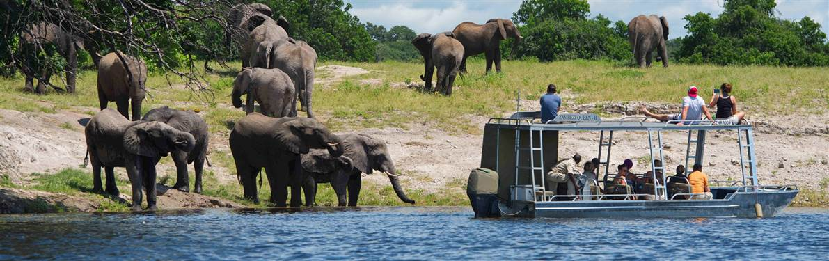 zambezi queen game viewing chobe nationa