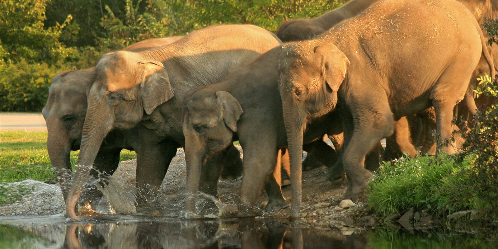 Elephants at Rajaji National Park
