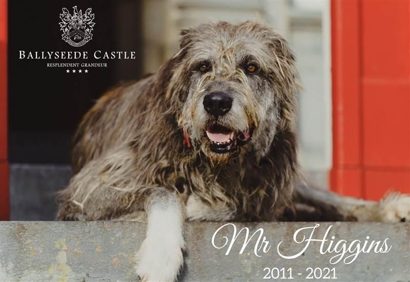 Mr Higgins 2011 - 2021