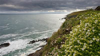 ballycotton coastline