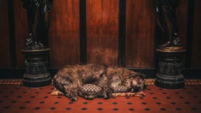 Cabra Castle Dog