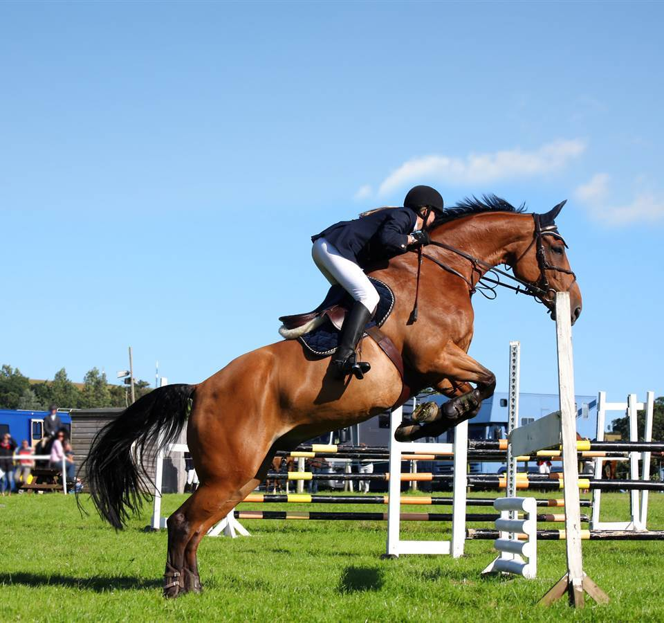 South Wales Shire Horse Show things to do in Abergavenny