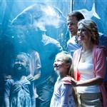 Family looking into large aquarium 800x5