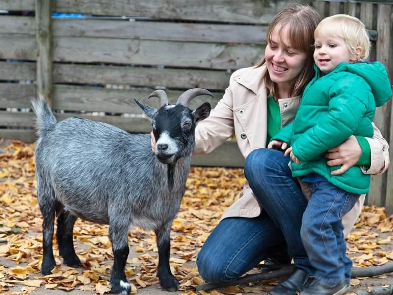Godstone Farm Family Dinner, Bed & Breakfast Package