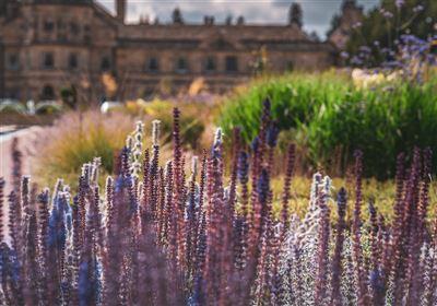 rhil garden jemma