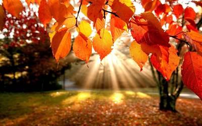 Autumn Slumber