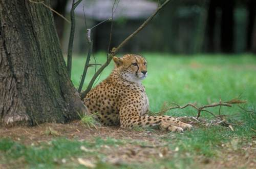 medium Fota Wildlife Park1