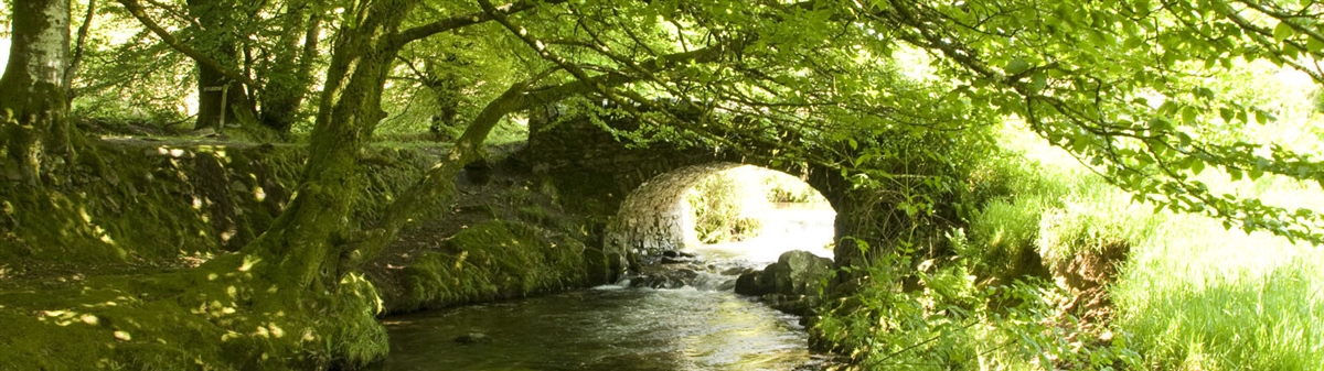 Stream and old bridge on Exmoor, Devon (