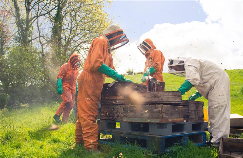 Beekeeping Experience Break