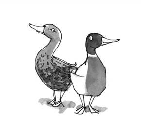 landscape duck