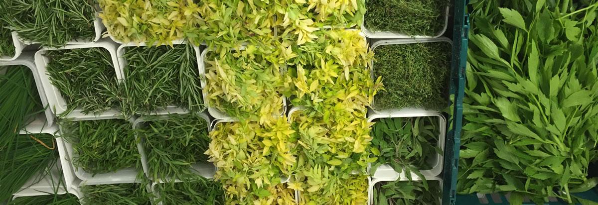 Herbs from Knockranny gardens