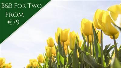 Westport Spring Offer