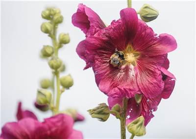 GardensAug2019 067