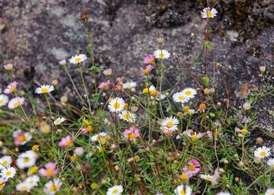 GardensAug2019 076