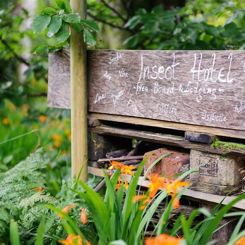 GardensAug2019 051
