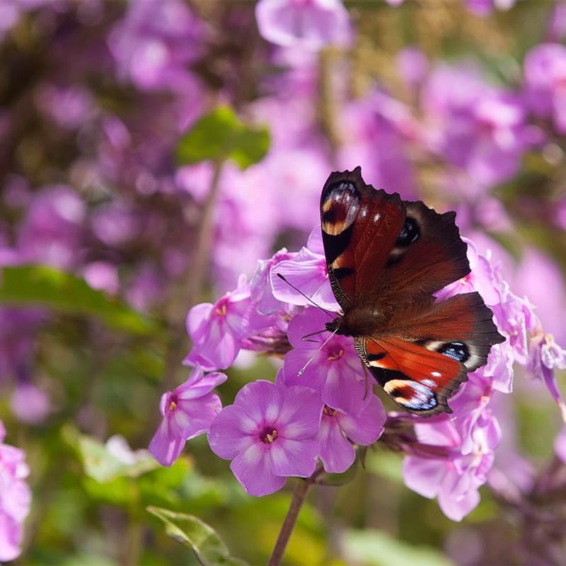 GardensAug2019 064