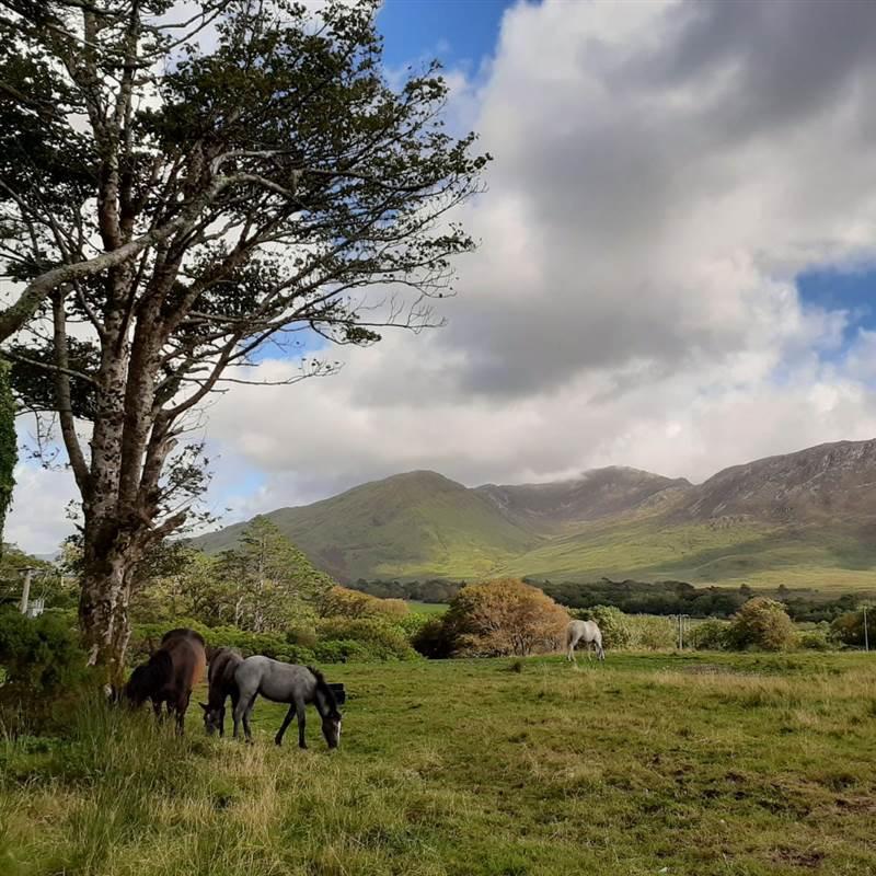 Ponies in paddock