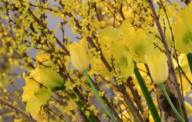 Springflower1LR short