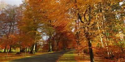 Powerscourt Avenue in Autumn