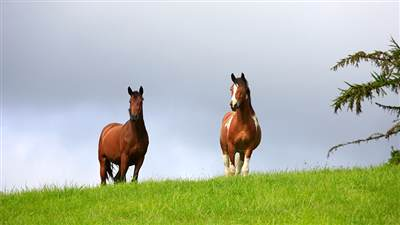 Powerscourt horses