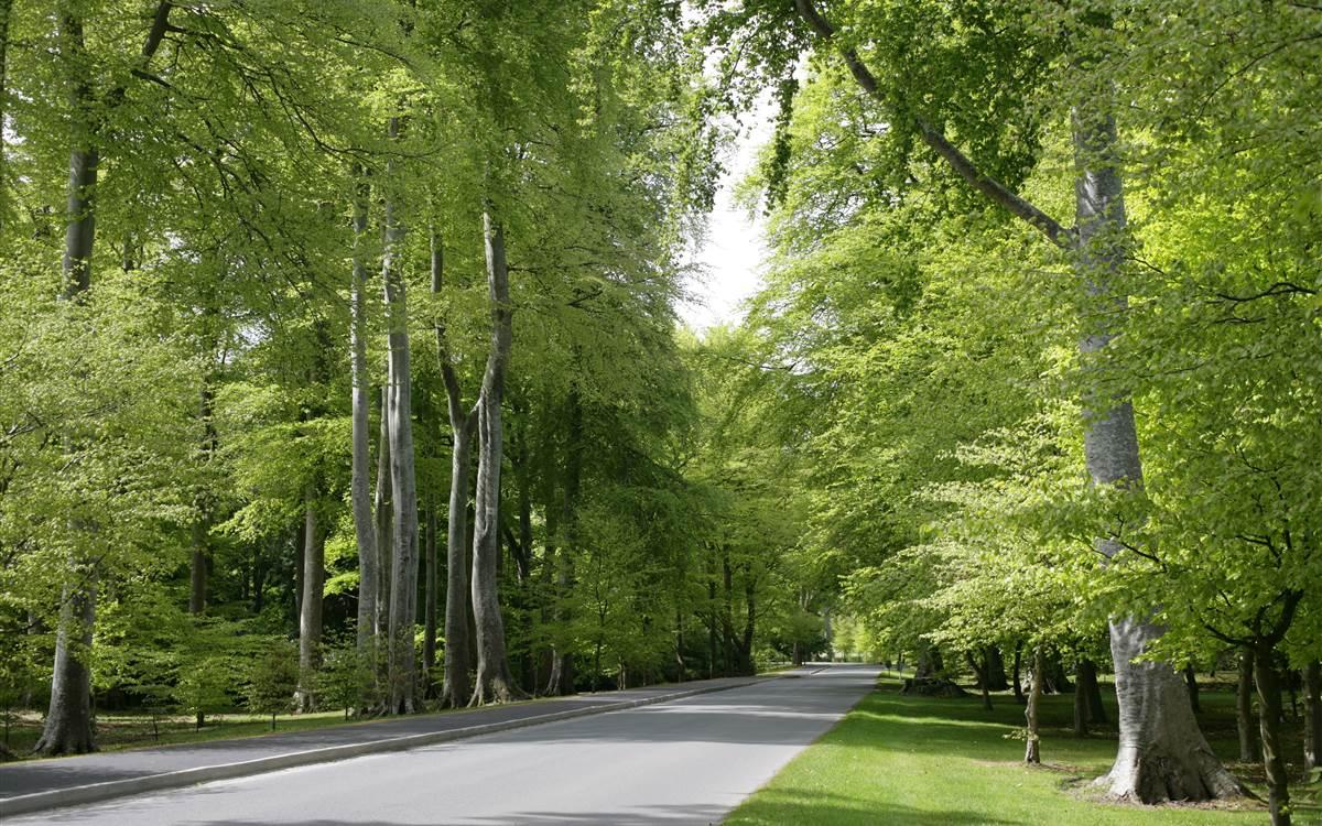 Powerscourt Avenue in Summertime