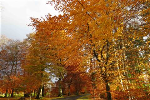 Keep Discovering Autumn Powerscourt Hotel From €126 pps Keep Discovering Autumn