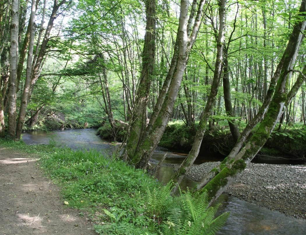 River Walk   web