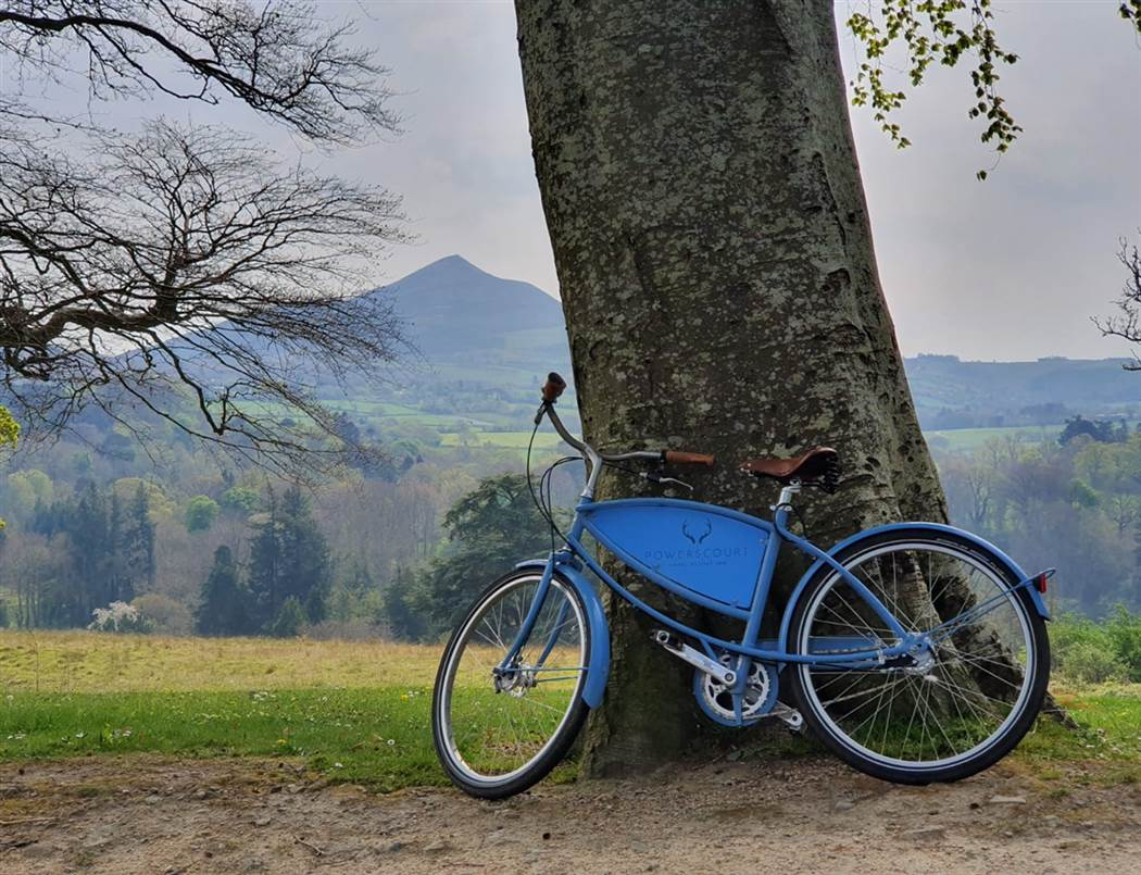 blue bicycle by tree